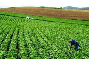 een arbeider die gewassen van een veld verzamelt foto