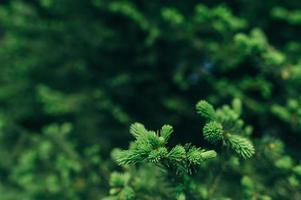 kleine boom foto