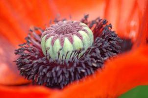 hart van een bloem foto