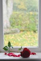 rode roos aan de rand van het raam foto