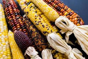 vuursteen maïs foto
