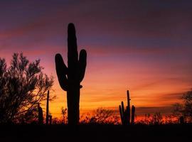 saguaro zonsondergang foto