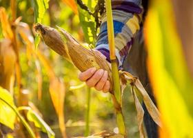 close-up op jonge vrouw tearing maïs