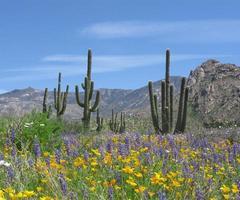 lente in de woestijn foto