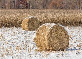 besneeuwde maïsstengelbalen