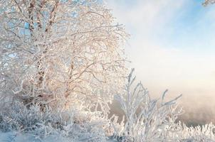 rivier winter foto