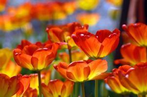 branden met oranje kleur
