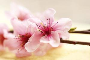 lente bloem foto