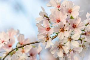 lente bloeit foto