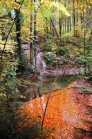 oranje bladeren en herfstkleuren in het bos foto