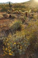 woestijn zuidwesten landschap foto