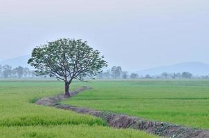 boom in landschap foto