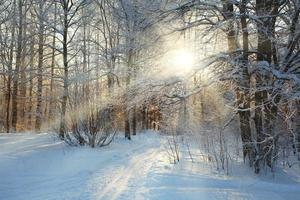 koude winter boslandschap sneeuw foto