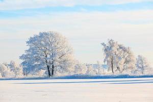 ijzige boom in besneeuwde landschap