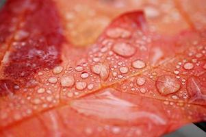 bladeren vallen foto
