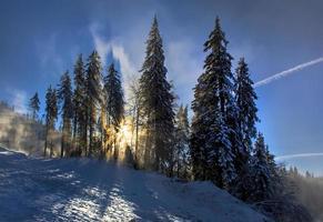 winterlandschap in het bos foto