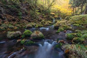 prachtige waterval in bos, herfst landschap foto