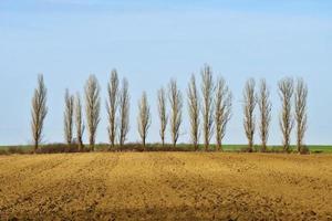 rij kale bomen bij het veld