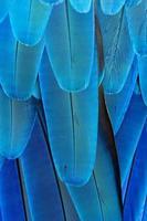 rijen blauwe veren van een vogel foto