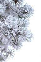 winter vakantie achtergrond. foto
