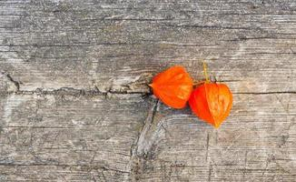 oranje winterkers foto