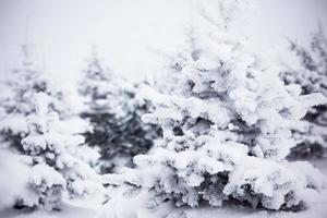 winter bos met sneeuw foto