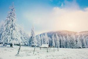 winterlandschap van besneeuwde bomen in de winter rijm en c foto