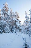 besneeuwde bos in de winter foto