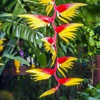 bloesem van een bananenboom in een botanische tuin foto