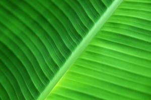 bananenblad textuur foto