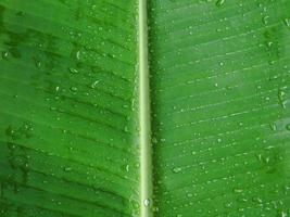 bananenblad met dauw achtergrond foto