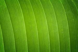 bananenblad textuur