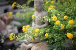 boeddha bij een beek foto