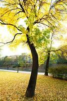 fietspad in de herfst park