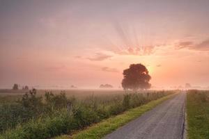 mistige zomer zonsopgang boven fietsweg
