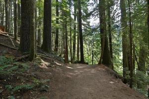 bos van de patriarchen trail foto