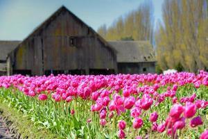 mooi in roze foto