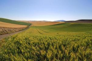 velden van tarwe, gerst en sojabonen langs een landweg