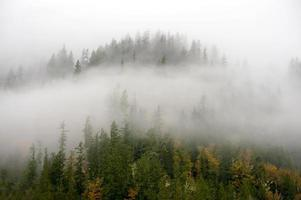 herfst in het noordwesten. foto