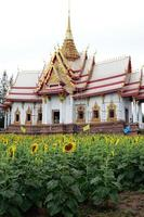 zonnebloem en tempel achtergrond