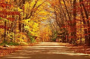 herfst scène met weg