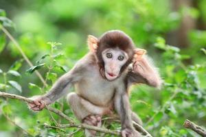 gekke albino makaak in hong kong foto