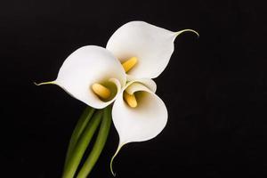 mooie witte calla lelies op zwarte achtergrond foto