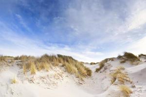Noordzee duinen foto