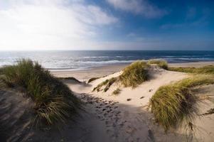 oceaan duinen met hoog gras groeit foto