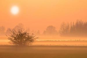 gele zonsondergang foto