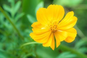 gele bloem foto