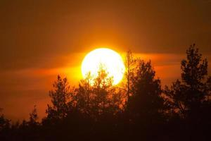 zonsondergang over hout
