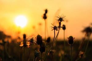 verlicht van zonsondergang foto