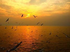 zeemeeuw met zonsondergang foto
